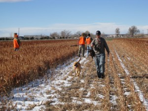 Colorado Pheasant Hunting with Guides and Dogs