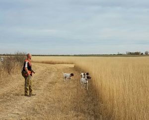 A man and dogs colorado pheasant hunting at longmeadow