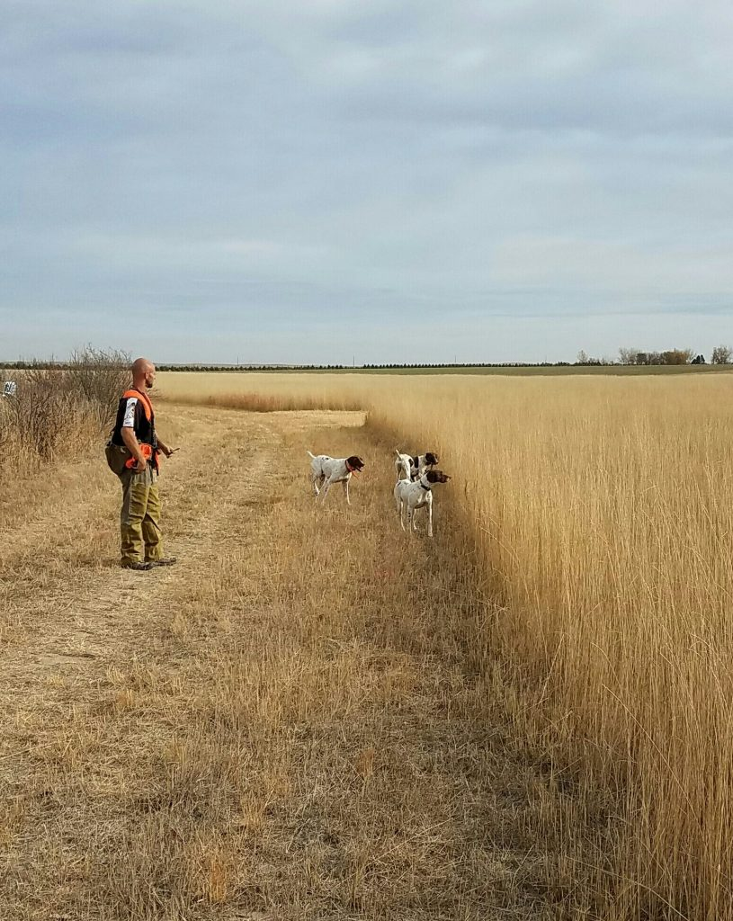 Pheasant Hunting Grounds at Longmeadow