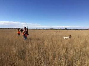 Men and dogs Pheasant Hunting in Colorado