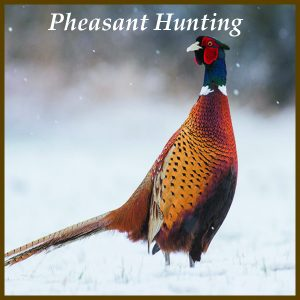 Pheasant Hunting at Longmeadow
