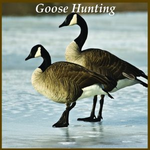 Goose Hunting at Longmeadow