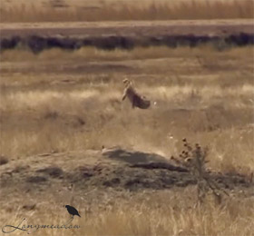 Longmeadow Game Resort Prairie Dog Hunting