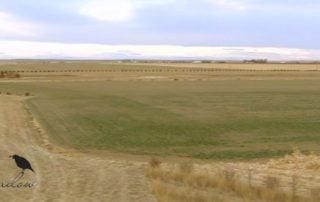 open range for prairie dog hunting