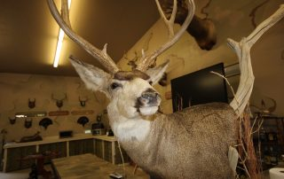 deer head trophy in the prairie dog hole at longmeadow
