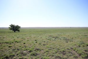 a lone tree in a feild with a prairie dog town around its base