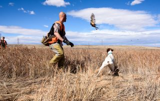 Colorado Pheasant Hunting