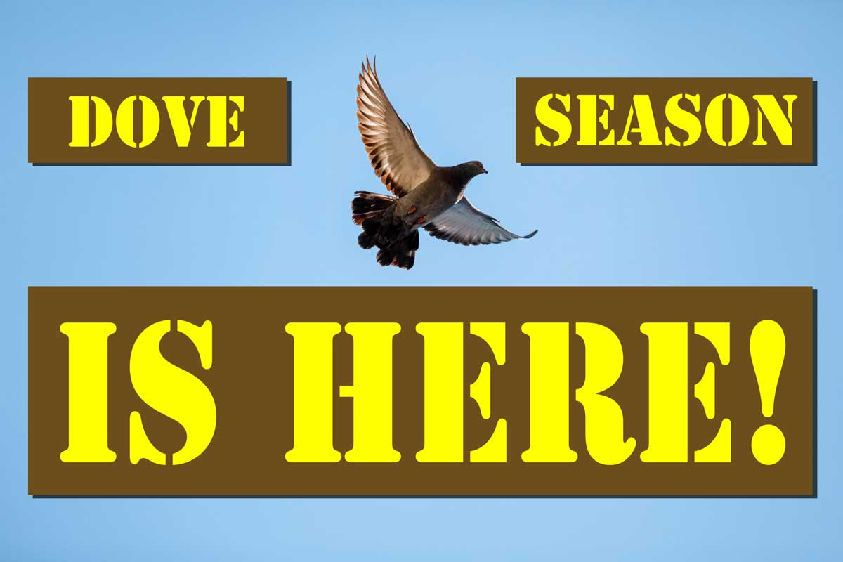 5 Tips for Opening Day of Dove Season